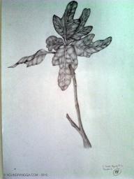 tugas menggambar pohon, tapi cuma ambil bagian daunnya aja sih...