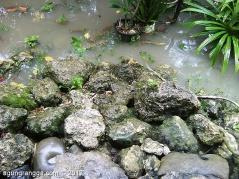 batu-batu di kebun