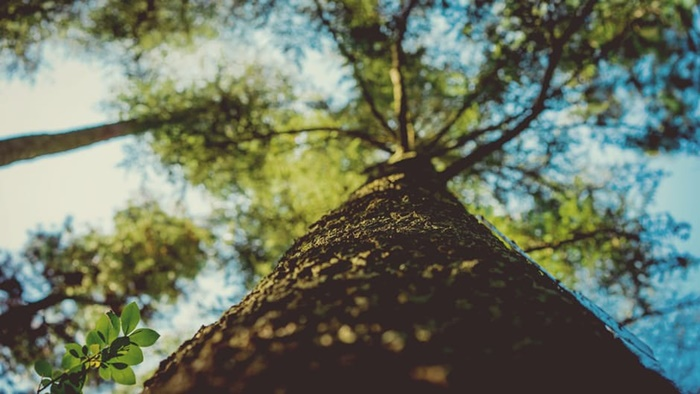 Minimal, 1 Orang = 1 Pohon!