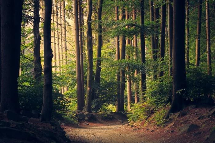 World Environment Day   hutan : si pennyangga kehidupan