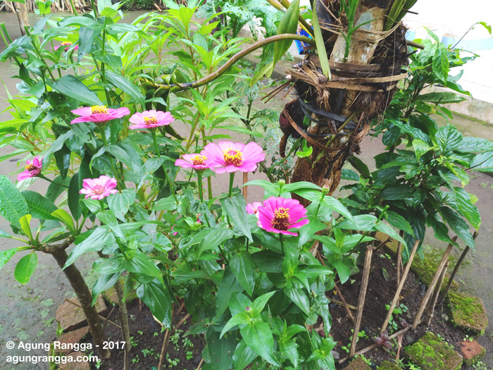 pohon bunga di pekarangan rumah