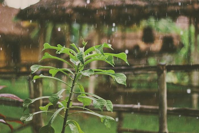 Selamat Datang, Hujan
