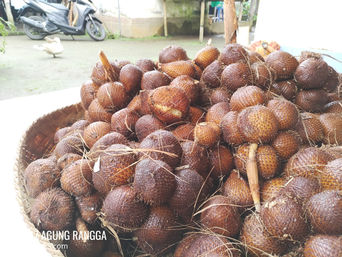 oleh-oleh salak Bali